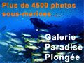 Photos sous-marines